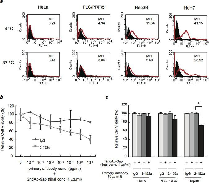 Specific uptake mediated by cell-surface DHCR24. ( a ) HCC cell lines (HuH-7, Hep3B, and PLC/PRF/5) and HeLa cells were incubated with 2-152a MAb at 4°C (a temperature that inhibits endocytosis) or 37°C (physiological temperature) for 2 h, and then incubated with an Alexa Fluor 488-conjugated goat anti-mouse IgG at 4°C for 1 h. The cells were then analyzed by flow cytometry. ( b ) HuH-7 cells were seeded at a density of 5 × 10 3 cells/well in 96-well tissue culture plates. After incubation for 24 h, serial dilutions of 2-152a MAb or mouse IgG were added in the presence of saporin-conjugated anti-mouse IgG (1 μg/mL). After 72 h, cell viability was then assessed using the BrdU ELISA assay kit. Average viability was calculated relative to the viability of untreated cells, which was set at 100%. ( c ) HeLa, Hep3B, and PLC/PRF/5 cells were treated with 2-152a MAb or mouse IgG (10 μg/mL) in the presence or absence of saporin-conjugated anti-mouse IgG (1 μg/mL). After 72 h, cell viability was determined using a BrdU ELISA assay kit. Percent viability was calculated relative to the viability of untreated cells, which was set at 100%. *, p