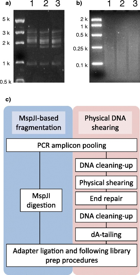 Resequencing of PCR amplicons with the MspJI-based DNA fragmentation method. ( a ) Pooled PCR amplicons containing 5 m C. Locus-specific amplification was performed for each sequence independently. ( b ) MspJI digestion of the PCR amplicons. ( c ) Flowchart of the MspJI- and physical shearing-based library prep procedures from PCR amplicons.