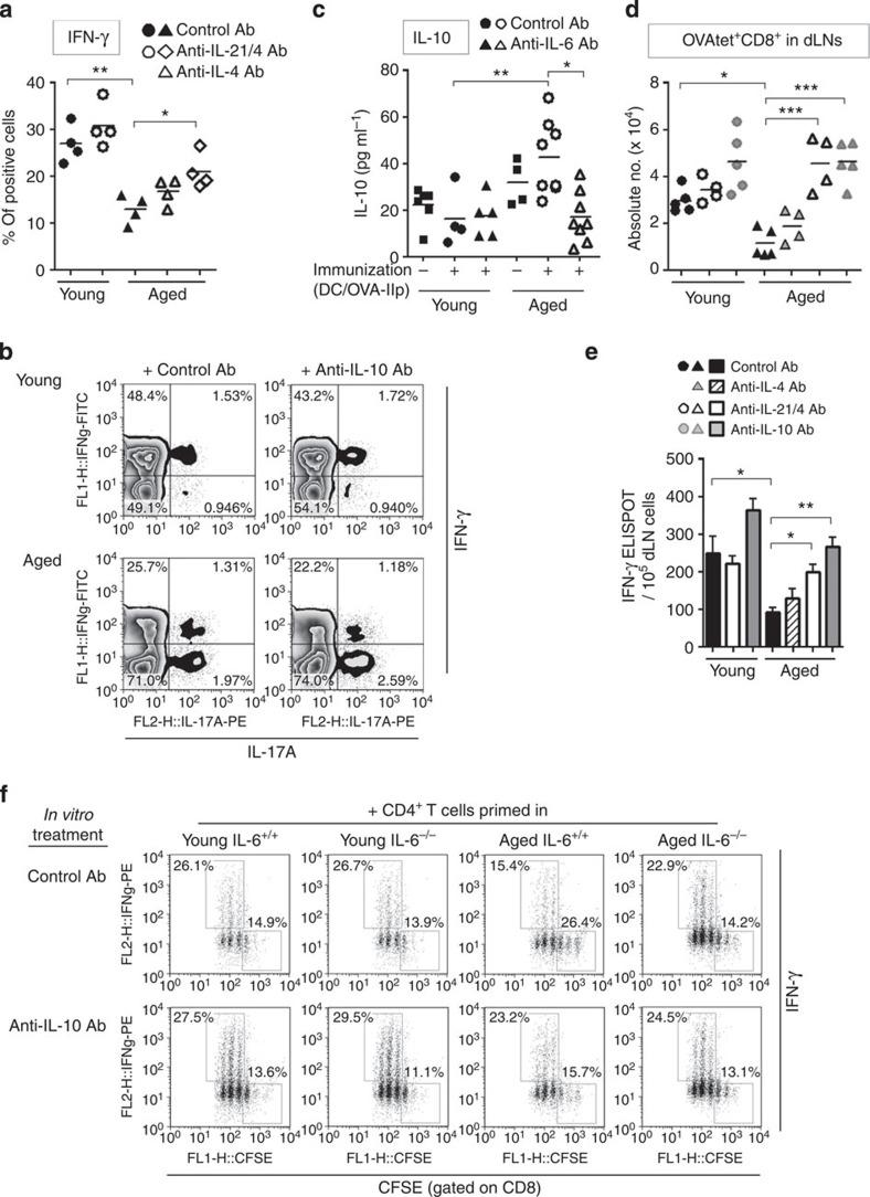 IL-6-induced IL-4/IL-21/IL-10 production is responsible for the defective CD8 help in aged mice. ( a , b ) OT-II cells were primed in young or aged mice at day 0 as in Fig. 1b , and then were treated with control Ab, anti-IL-4 and anti-IL-21 Abs ( a ) or anti-IL-10 Ab ( b ) on days 3 and 4. Six days after immunization, the frequencies of IFN-γ + cells in the donor OT-II cells were determined. ( b ) Representative plots. ( c ) OT-II transfer, immunization, Ab treatment and MCA-OVA inoculation were performed as in Fig. 1d . Four days after tumour inoculation, IL-10 concentration in serum was determined. ( d , e ) OT-II transfer, immunization and treatments of anti-IL-4 and anti-IL-21 Abs were performed as in a . Five days after immunization, mice were inoculated with MCA-OVA. Anti-IL-10 Ab was injected twice at 2 and 3 days after tumour inoculation. Five days after tumour inoculation, draining LNs were analysed for OVA-specific CD8 + T cells using OVA-Ip tetramer ( d ). OVA-Ip-specific CD8 + T-cell response was also evaluated by the IFN-γ ELISPOT assay ( e ). Data shown are mean±s.e.m. with n =4–5 per group. ( f ) CD62L lo effector OT-II cells primed in young or aged IL-6 +/+ or IL-6 −/− mice were sorted as in Fig. 4a and were co-cultured with CFSE-labelled CD8 + T cells in the presence or absence of anti-IL-10 Ab. After 3 days, CFSE profile and IFN-γ production in CD8 + T cells were determined using a flow cytometer. Representative data from two independent experiments are shown. * P