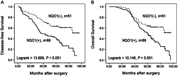 Kaplan-Meier analysis of DFS and OS rates in 150 NSCLC patients in relation to NQO1 protein expression. Patients of NSCLC with NQO1 positive expression had lower DFS ( A , P