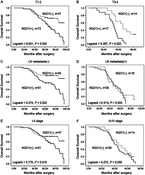 Kaplan-Meier analysis of OS rates in patients with or without NQO1 expressed NSCLC in prognostic factors. OS was assessed in NSCLC patients with T1-2 ( A , P = 0.002), T3-4 ( B , P = 0.002), LN metastasis (−) ( C , P = 0.002), LN metastasis (+) ( D , P = 0.553), I-II stage ( E , P = 0.016), and III-IV stage ( F , P = 0.050) concomitant with either positive- or negative-expression of NQO1.