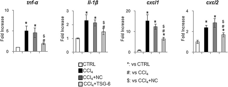 TSG-6 decreases the inflammation in the liver damaged with CCl 4 . QRT-PCR analysis of mouse liver for tnfα, il-1β, cxcl1 and cxcl2. Mean ± SD results are graphed (n ≥4 mice/group) (ANOVA, * P