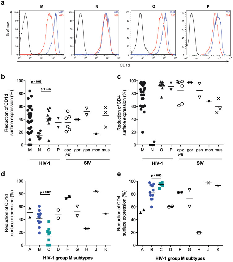 Vpu proteins of HIV-1 groups M, O and P and their SIV precursors down-regulate CD1d. 293T cells were co-transfected with human CD1d or CD4 and vpu alleles derived from group M, N, O and P viruses and related SIVs, or eGFP control, respectively. CD1d and CD4 surface expression levels were analyzed 24 h post transfection using flow cytometry. Down-regulation was calculated by comparing CD1d and CD4 surface MFIs in cells expressing Vpu/eGFP and the eGFP control. Each symbol represents one vpu allele and the average value of at least three experiments. Horizontal lines indicate average reduction of surface expression of the respective group of vpu alleles. (a) Histograms demonstrating the effect of representative HIV-1 group M, N, O and P Vpu proteins on CD1d surface expression. Blue lines indicate cells expressing eGFP control plasmid; red lines, Vpu/eGFP expressing cells; black lines, non-transfected controls. Figures indicate CD1d MFI values in the absence (blue) or presence (red) of Vpu. (b, c) Reduction of CD1d and CD4 surface expression by HIV-1 and SIV Vpu proteins. Statistical analysis was done using GraphPad Prism software and Kruskal-Wallis test with Dunn's multiple comparisons test. (d, e) As in b, c but HIV-1 group M Vpu proteins divided into subtypes are shown. Statistical analysis was done using an unpaired t-test.