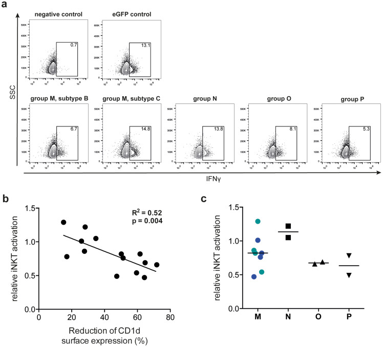 Vpu-mediated down-regulation of CD1d correlates with decreased activation of CD1d-restricted iNKT cells. <t>293T</t> cells were co-transfected with CD1d and HIV-1 vpu alleles or eGFP control, respectively. At 24 h post transfection, cells were used for analysis of CD1d surface expression levels using flow cytometry and loading with the model lipid antigen αGalCer. The human CD4 + iNKT cell clone HDD3 was co-incubated with the αGalCer-loaded 293T cells in the presence of brefeldin A for 6 h, and subsequently analyzed for IFN-γ production using flow cytometry. iNKT cell IFN-γ production induced by 293T cells co-transfected with CD1d and eGFP control was set to 1, and all samples were calculated relative to control. (a) Representative dot plots showing iNKT cell IFN-γ production induced by 293T cells co-transfected with CD1d and vpu alleles of the indicated HIV-1 groups and controls. (b) Relationship between Vpu-mediated CD1d down-regulation and iNKT cell activation was assessed using linear regression and Pearson correlation. (c) Effect of expression of different HIV-1 vpu alleles on IFN-γ production by iNKT cells. Blue and green symbols represent subtype B and C Vpu proteins, respectively. Each data point represents one vpu allele and the average value of two experiments performed in at least duplicate.