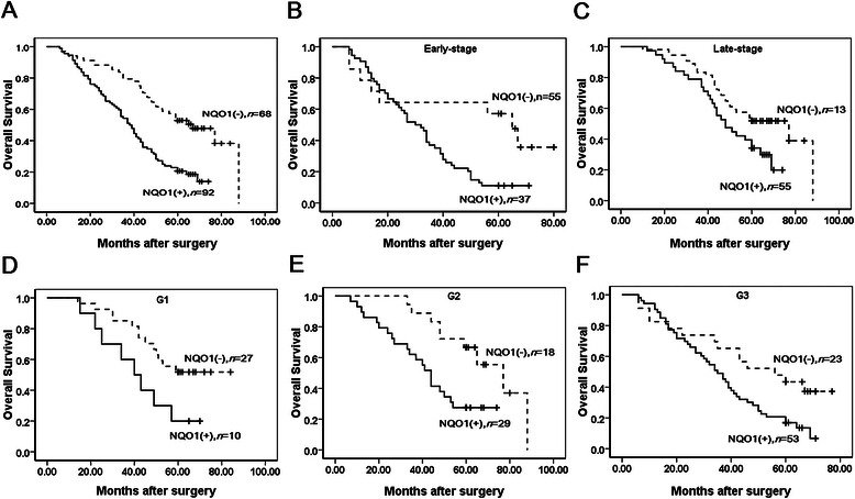 Kaplan-Meier survival curves illustrating the significance of NQO1 expression in ovarian carcinomas. (A) OS rates of patients with high (solid, n = 92) and low (dashed, n = 68) NQO1 expression. A: Log-rank = 21.699, P = 0.000. (B - C) High NQO1 expression was strongly associated with poor OS in early-stage (solid, n = 37) and late-stage (solid, n = 55). B: Log-rank = 6.527, P = 0.011; C: Log-rank = 4.806, P = 0.028. (D-F) High NQO1 expression was strongly associated with poor OS in G1 (solid, n = 10), G2 (solid, n = 29) and G3 (solid, n = 53). D: Log-rank = 4.359, P = 0.037; E: Log-rank = 7.020, P = 0.008; F: Log-rank = 5.978, P = 0.015).