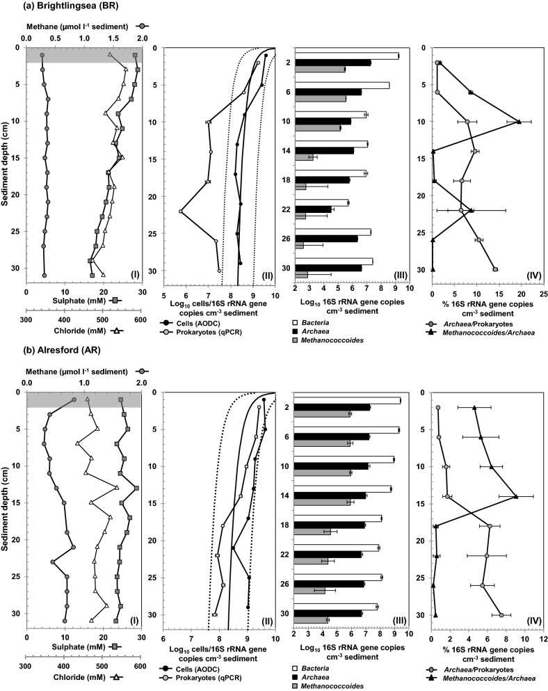 Depth profiles of geochemical data, total cell numbers and Archaea 16S rRNA gene copies for Colne Estuary sediment cores, (a) BR, (b) AR and (c) HY. Graph panels show data for (I) pore water chloride, sulphate and methane; shaded region denotes depths of samples used for archaeal 16S rRNA and mcr A gene libraries. (II) Log10 total cell numbers determined by AODC and prokaryotic 16S rRNA gene copy numbers determined by qPCR. The solid line shows Parkes, Cragg and Wellsbury (2000) general model for prokaryotic cell distributions in marine sediments, and dotted lines represent 95% prediction limits. (III) Log10 16S rRNA gene copy numbers for Bacteria , Archaea and Methanococcoides species. (IV) Percentage of Archaea and Methanococcoides species of the total prokaryotic and Archaea populations, respectively. All qPCR data points are means of three replicates.