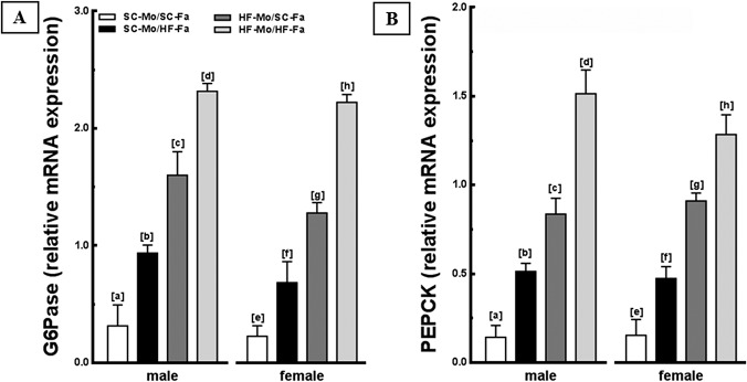 Molecular analyses in the offspring liver (panel 2). (A) G6Pase and (B) PEPCK mRNA levels of the male and female offspring at 12-weeks old. Endogenous control <t>beta-actin</t> was used to normalize the expression of the selected genes. Data are expressed as the mean and SD (n = 5 mice per group, one-way ANOVA and the posthoc test of Holm–Sidak). Same letters represent equal groups with no statistical difference while different letters represent different groups from each other, with statistical difference ( P