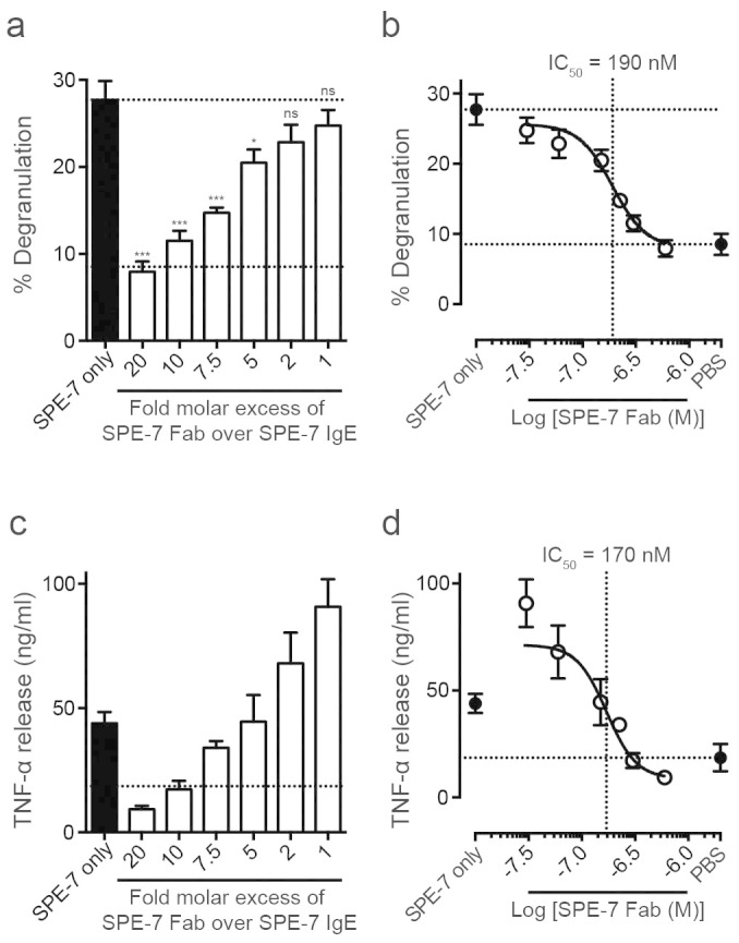 SPE-7 IgE Fab inhibits SPE-7 IgE induced LAD-2 cell activation. (A) Percentage degranulation of LAD-2 cells, induced by 30 nM SPE-7 IgE, was dose-dependently inhibited by addition of indicated molar excess of recombinant SPE-7 IgE Fab. (B) Data are shown in an inhibition curve. IC 50 of SPE-7 IgE Fab inhibition of SPE-7 IgE induced degranulation = 190 nM. Lower and upper dashed lines indicated cell-only background control and activation by SPE-7 IgE only, respectively. (C) LAD-2 cell TNF-α release, evoked by 30 nM SPE-7 IgE, was dose-dependently inhibited by addition of indicated molar excess of recombinant SPE-7 IgE Fab. (D) IC 50 of recombinant SPE-7 IgE Fab inhibition of SPE-7 IgE evoked TNF-α release ~170 nM. Dashed line indicates cell-only background control. Means of 4 to 10 independent experiments ± SEM are shown. Statistically significant difference to SPE-7 IgE only was determined by one-way ANOVA with Dunnett's post-test; *** p
