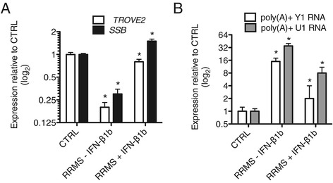 Interferon-β1b (IFN-β1b) therapy corrects aberrant levels of TROVE2 , SSB , poly (A) + Y1 RNA, and poly(A) + U1 snRNA in RRMS. Blood samples were collected in PaxGene tubes from CTRL (N = 12), RRMS subjects not on IFN-β1b (RRMS - IFN-β1b, N = 12), and RRMS subjects on stable IFN-β1b therapy (RRMS + IFN-β1b, N = 4). Oligo dT was used for cDNA synthesis. Transcript levels of TROVE2 and SSB ( A ) or poly(A) + Y1 RNA and poly(A) + U1 RNA ( B ) were determined by quantitative PCR and normalized to CTRL = 1 after normalization to levels of GAPDH . Error bars are ± S.D. * P