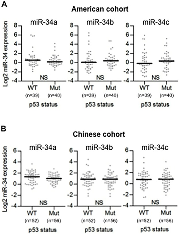 TP53 mutation is not associated with the expression of miR-34 family. (A, B) TP53 mutational status was evaluated by immunohistochemistry using Formalin-Fixed Paraffin-Embedded (FFPE) tissues. Dot plots represent miR-34a/b/c threshold cycle values of tumor tissue from TaqMan qRT-PCR normalized to U66 in American cohort (A) and Chinese cohort (B). Horizontal bars indicate median expression value. Mann-Whitney test was used. WT: wild-type p53, Mut: mutant p53.
