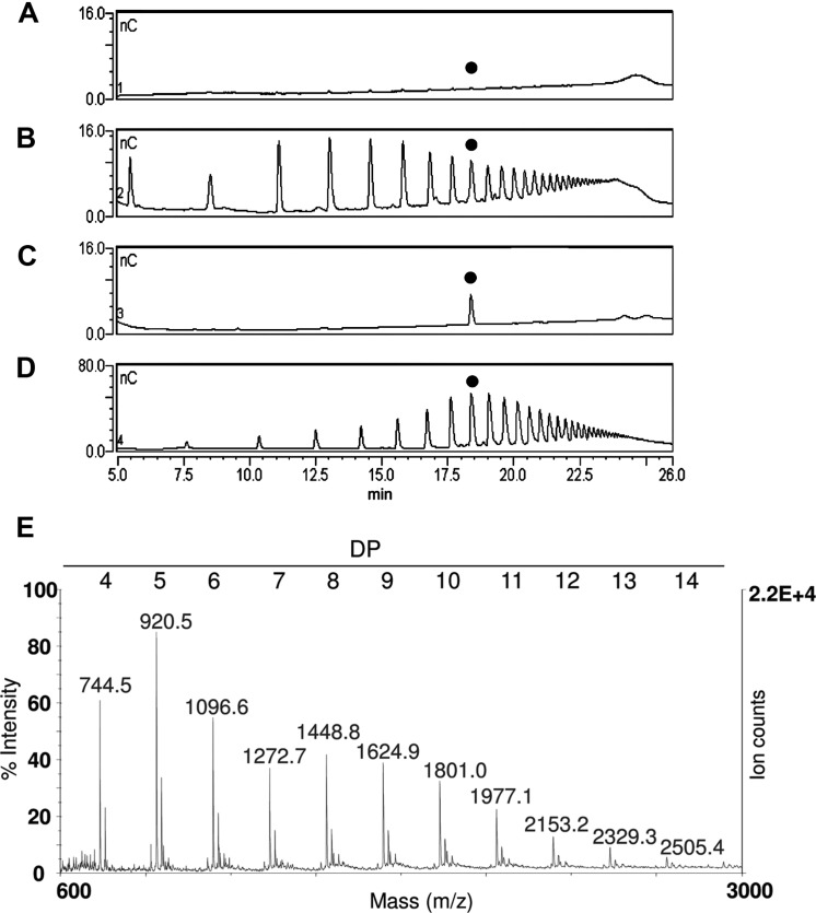 The upper panel shows the HPAEC-PAD profiles of fractions extracted from leaves of plants of different age: (A) 3-week-old plants, (B) 7-week-old plants, (C) purified standard oligomer with DP 10, and (D) standard OGs with DP from 3 to 26 . The peak corresponding to the oligomer with DP 10 is indicated with a black dot. (E) MALDI-TOF mass spectrum of the oligomers extracted from 7-week-old plants.