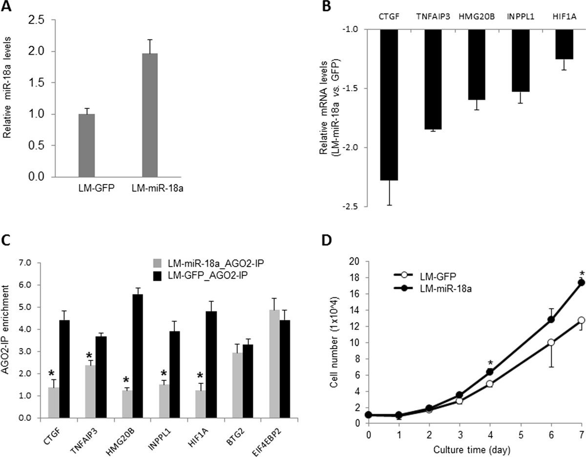 Effects of ectopic microRNA-18a expression on gene expression and cell growth in MB231RN-LM cells. (A) Expression levels of microRNA-18a (miR-18a) in cells transduced with <t>lentiviral</t> vector expressing miR-18a green fluorescent protein (GFP) (LM-miR-18a) and or control cells transduced with lentiviral vector expressing GFP only (LM-GFP). (B) Effect of miR-18a on expression levels of predicted target mRNAs. mRNA levels were examined by quantitative PCR (qPCR) and normalized to ACTB . The expression levels of all the presented genes were significantly reduced by miR-18a expression ( n = 3, P