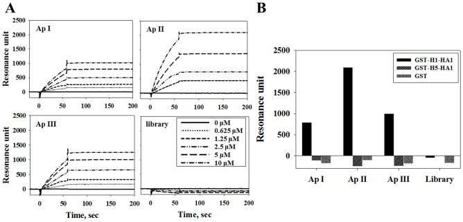 Affinity measurements of biotinylated ssDNA aptamers by SPR. (A) Biotinylated aptamers immobilized on an NLC sensor chip and interacting with various amounts of GST-H1-HA1. Equilibrium dissociation constants K D were calculated from association and dissociation rate constants (K D = k d /k a ) as 96.6 nM for ApI, 1.09 μM for ApII, and 293 nM for ApIII. (B) Interaction of 10 μM H1-HA1, H5-HA1, or GST with aptamers immobilized on an NLC sensor chip, as measured by SPR.
