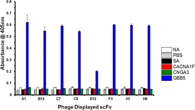 ELISA of scFv-displayed virions against the GBB5 peptide. ScFv antibodies, raised against the GBB5 peptide, are displayed on phage particles and used to probe peptides, which are captured on microtiter plate well surface. The phage-displayed scFvs are named according to the well location of the 96-well screen in which they were originally found. Specificity is determined by the intensity of the absorbance signal for the target peptide (GBB5), compared to the background NeutrAvidin (NA), Streptavidin (SA), Phosphate Buffered Saline (PBS) coated wells or unrelated peptides, CACNA1F and CNGA3.
