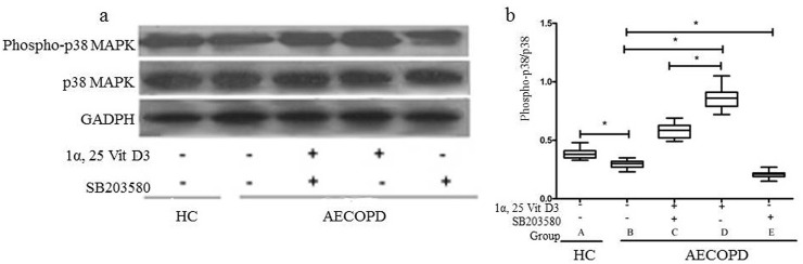Effect of 1α,25VitD3 on the expression of phospho-p38 MAPK in the peripheral blood neutrophil of the AECOPD patients. Neutrophils (1×10 6 ) were pretreated with <t>SB203580</t> (2.5 μM×10 –5 ) for 0.5 h, followed by incubation with 1α,25VitD3 (6 ×10 -7 M) for 24 h. Western blot was used to analyze the phospho-p38 MAPK and p38 MAPK levels. The experiments shown are representative of at least 3 experiments. * p