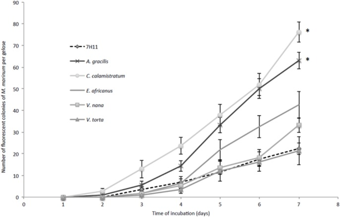 A . gracilis and C . calamistratum extracts increase the growth rate of M . marinum on <t>Middlebrook</t> <t>7H11-enriched</t> media. Kinetics of growth of M . marinum in Middlebrook 7H11 medium and Middlebrook 7H11-based solid medium enriched with plant filtered extracts (10%, vol:vol), detected by autofluorescence. Each data point represents the mean ± standard error for six plates per time point. The asterisks represent medium facilitating a significant increase of the number of M . marinum colonies at each time point compared to Middlebrook 7H11 medium.