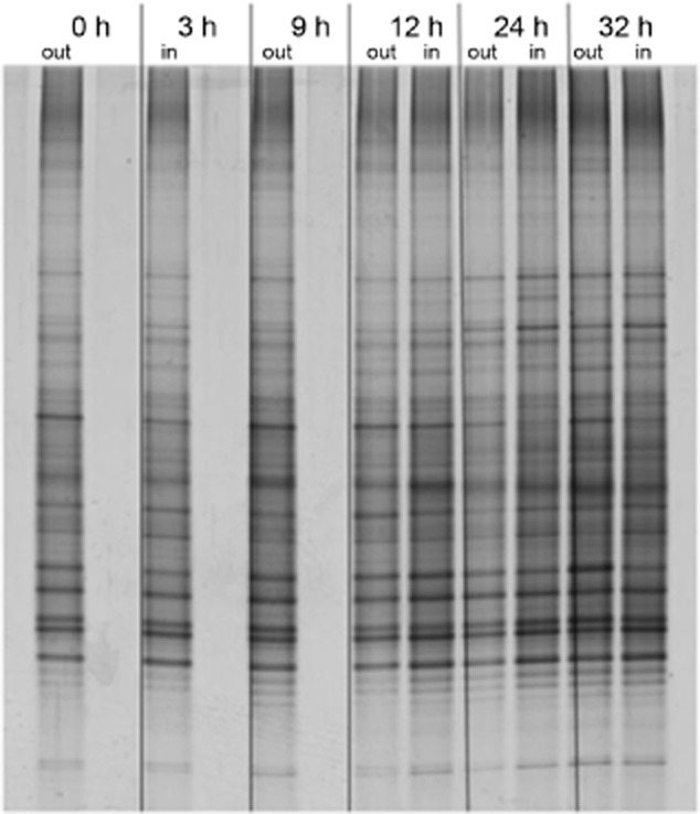 DGGE profiles of amplified bacterial 16S rRNA genes from 1.5 m (out) and 3 m (in) below the sea surface during the experimental oil spill (outside and inside the spill respectively) at different times. Refer to the Experimental Procedures for an explanation of the experimental-spill and sampling strategy.