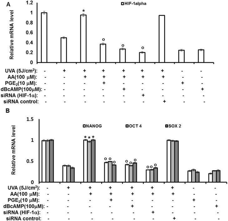 Antagonizing effects of aspartic acid against UVA-induced downregulation of stemness genes are mediated by downregulating PGE 2 -cAMP-HIF-1α signaling through inhibition of AP-1. hAMSCs were irradiated with 5 J/cm 2 UVA or transfected with the siRNA for HIF-1α and then incubated for three days with aspartic acid (100 μM) in the presence of the indicated concentration of PGE 2 or cAMP under serum-free conditions. After three days of incubation, total RNA was isolated and the mRNA levels of the HIF-1α gene (A) and OCT4, NANOG, SOX2 genes (B) were measured by real-time quantitative RT-PCR. The results are expressed relative to untreated cells after normalization against GAPDH. Data are expressed as the means ± S.D. *, p