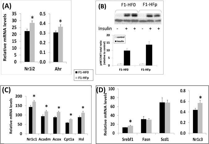 (A) Effect of the mixture of pollutants on hepatic mRNA expression of xenobiotic nuclear receptors; (B) Analysis by Western blot of the ratio between phosphorylated PKB/AKT versus total PKB/AKT in liver removed from F1-HF0 and F1-HFp mice stimulated or not by insulin. For quantification, each blot has been hybridized to α-tubulin and the graphs below represent means ± SE; n = 7–8 mice. (C) and (D) Hepatic expression of Nr1c1 and of several PPARα-regulated genes (C) and of genes encoding proteins involved in lipogenesis (D). Results are means ± SE; *p