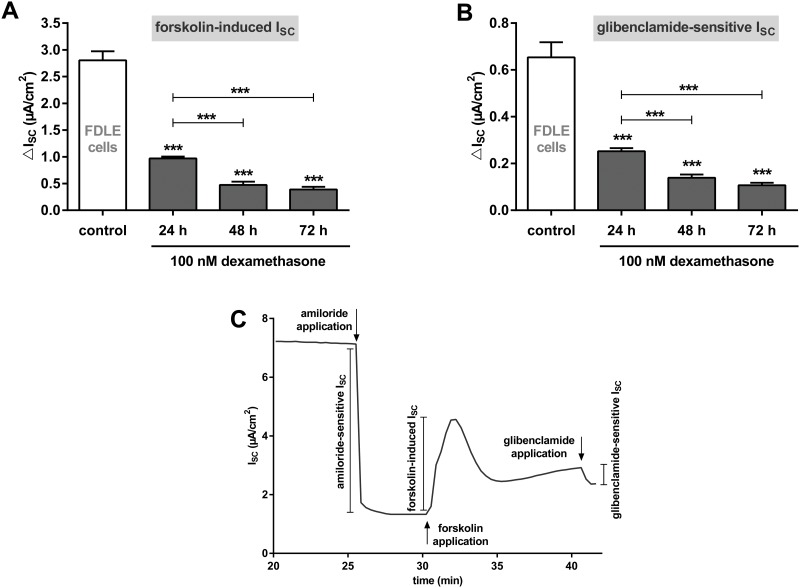Dexamethasone reduces Cftr channel activity in FDLE cells. Graphs represent the mean + SEM of I SC in response to 100 nM dexamethasone for 24, 48 and 72 h measured in Ussing chambers. A: <t>Forskolin-induced</t> I SC (n = 25–56, *** p
