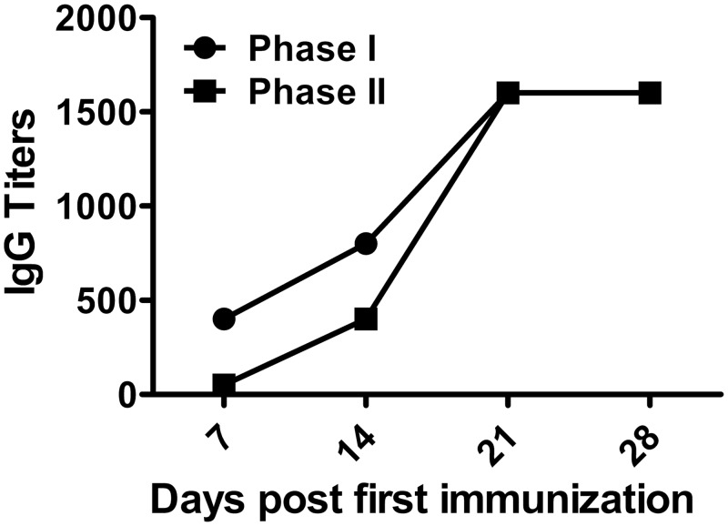 Specific antibodies determined by IFA. Serum samples were collected from mice immunized with rOmpB-4 combined C . burnetii CMR on days 7, 14, 21, and 28 after first immunization, respectively. Anti- C . burnetii phase I/II IgG titers was evaluated by IFA.