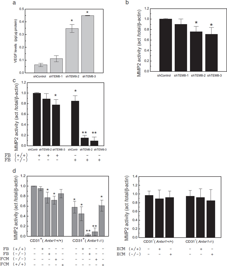 Dysregulation of MMP2 activity in TEM8 mutant cells. (a) ELISA showing VEGF levels in lysates of stable endothelial cell lines with different degrees of Antxr1 knockdown (shTEM8-1/26%; shTEM8-2/60%; shTEM8-3/90%). (n = 3; *P