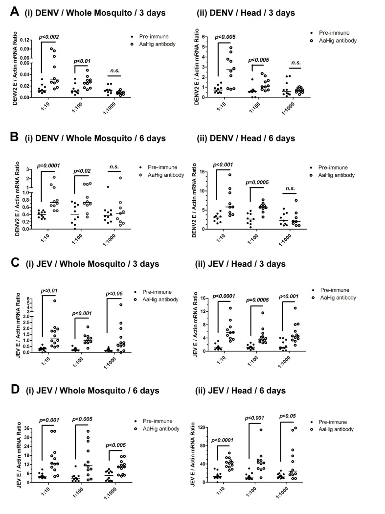 The role of AaHig in flaviviruses infection of A . aegypti . Immuno-blockade of AaHig enhanced the DENV-2 (A-B) and JEV (C-D) infections in the whole bodies (i) and heads (ii) of mosquitoes. The murine AaHig antibody, in the 10-fold serial dilutions, was premixed with 10 M.I.D. 50 viruses to co-microinject into the thorax of mosquitoes. The treated mosquitoes were sacrificed to examine the viral load in the whole mosquito bodies (i) and heads (ii) at 3 (A, C) and 6 (B, D) days post-infection by TaqMan qPCR and normalized against A . aegypti actin . The results were reproduced by 3 times. One dot represents 1 mosquito/head and the horizontal line represents the median of the results. The data were analyzed statistically using the non-parametric Mann-Whitney test.