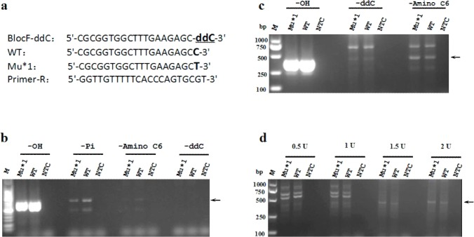 Blocking efficiency of three kinds of blocked primers in PCR amplifications mediated by Taq DNA polymerase and high-fidelity DNA polymerase. (a) Primer and template sets. WT and Mu indicate wild-type and mutant types, respectively. The 3'-blocked forward primer completely matches the WT sequence but forms a mismatch with the Mu sequence (Mu*1) at the 3'-end. The reverse primer matches both the WT and Mu sequences. The 3'-terminal nucleotide of the blocked primer is blocked with-Pi or-Amino C6, or replaced with ddCTP. (b) Blocking efficiency of-Pi,-Amino C6 or-ddC in PCR mediated by Taq DNA polymerase. (c) Blocking efficiency of-Pi,-Amino C6 or-ddC in PCR mediated by high-fidelity DNA polymerase (KOD FX). (d) Discrimination efficiency of the typical proofreading-PCR medicated by various amounts (0.5, 1, 1.5 and 2 U) of KOD FX DNA polymerase using the ddC-blocked primer. All PCR amplifications were performed in a total volume of 20 μL containing 1 U of Taq or KOD FX DNA polymerase (Panel b and c) or various amounts of KOD FX DNA polymerase (Panel d). The cycling conditions consisted of pre-denaturation at 94°C for 2 min, followed by 30 cycles of denaturation at 94°C for 20 s, annealing at 56°C for 20 s and extension at 72°C for 25 s. NTC: no-template control.
