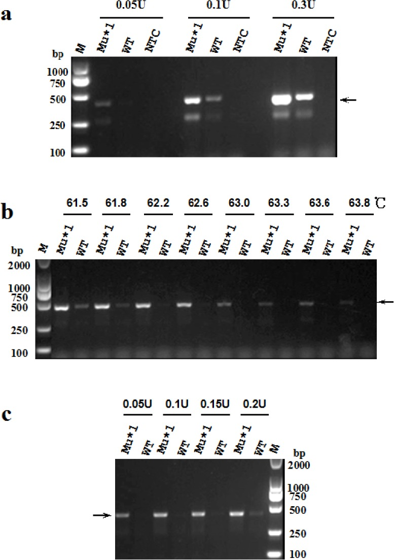 Optimization of annealing temperature and amount of high-fidelity DNA polymerase in the modified PR-PCR. (a) Discrimination efficiency of the modified PR-PCR for known mutations using a mixture of 1 U of Taq DNA polymerase and various amount (0.05, 0.1 and 0.3 U) of KOD FX DNA polymerase in the reaction. The PCR amplifications were performed in a total volume of 20 μL under cycling conditions consisting of pre-denaturation at 94°C for 2 min, followed by 30 cycles of denaturation at 94°C for 20 s, annealing at 56°C for 20 s and extension at 72°C for 25 s. (b) Optimization of annealing temperature for the modified PR-PCR using a mixture of 1 U of Taq DNA polymerase and 0.1 U of KOD FX DNA polymerase. As the optimal discrimination efficiency was obtained when the annealing temperature was within a scope of 61.8°C–62.6°C, the results from 50°C to 61.2°C were not shown. The temperature 62.2°C was selected for subsequent experiments. (c) Optimization of amount of high-fidelity DNA polymerase for the modified PR-PCR with an input of 1 U of Taq DNA polymerase at an annealing temperature of 62.2°C.