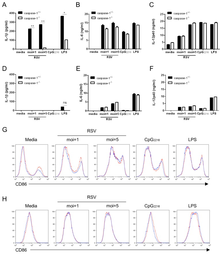 The upregulation of CD86 and proinflammatory cytokines, but not IL-1β, are not impaired in caspase-1 deficient BMDCs and BMMs. BMDCs and BMMs were differentiated from the bone marrow of wild type and caspase-1 -/- mice and stimulated with RSV (moi=1, 5), 2.5 µg/ml CpG 2216 , and 100 ng/ml LPS. After 20 hr, IL-1β, IL-6, and IL-12p40 in supernatants from BMDCs (A~C) and BMMs (D~F) were measured by ELISA. CD86 levels from BMDCs (G) and BMMs (H) were analyzed by flow cytometry (red line=caspase-1 +/- ; blue line=caspase-1 -/- ). Data are representative of two independent experiments. Error bars indicate SD.