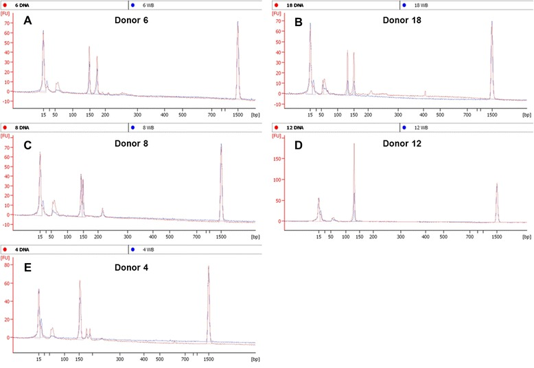 Selected <t>bioanalyzer</t> electropherogram overlays from purified DNA (red) or 10% whole blood (blue). Results from five representative donors illustrate examples of a confirmed heterozyote (A) , heterozygote with a 10% blood under the default FU cutoff (B) , and suspected heterozygote with split peaks as an allelic differentiator and a larger artifact (C) , confirmed homozygote (D) , homozygote with two smaller artifacts (E) .