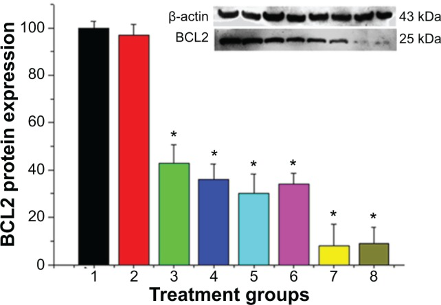 Western blot analysis showed the efficacy in suppressing BCL2 protein expression in MCF-7/Adr cells with different treatment groups (1, control; 2, naked siRNA; 3, HiPer-Fect/siRNA; 4, siPort NeoFX/siRNA; 5, HP-β-CD-PEI/siRNA; 6, HP-β-CD-PEI/DOX/siRNA; 7, FA-HP-β-CD-PEI/siRNA; 8, FA-HP-β-CD-PEI/DOX/siRNA). Notes: The purchased siRNA reagents (HiPerFect from Qiagen, siPort NeoFX from Invitrogen) were used as the positive control. A significant difference was observed between control and different treatment groups. Data shown here are the mean ± standard deviation of three independent experiments. Incubation, 72 hours; siRNA concentration, 100 nM. * P