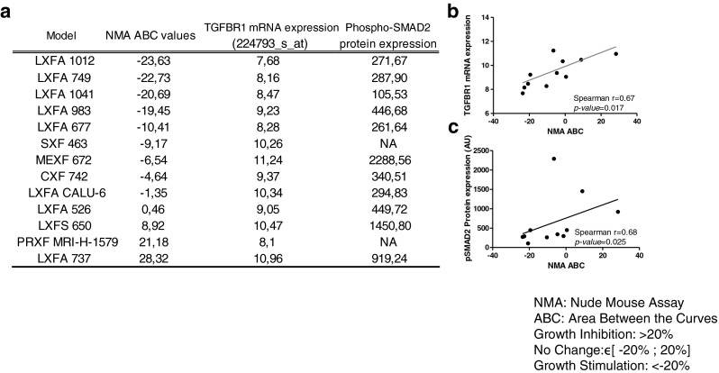 Galunisertib activities in 13 PDX samples and its correlations with <t>TGF-βRI</t> mRNA and pSMAD2 protein expression. ( a ) The in vivo efficacies were evaluated by ABC (see materials and methods ) values and compared to TGF-βRI mRNA expression (Affymetrix HGU133 Plus 2.0) and pSMAD2 protein expression (Western blotting; see Fig. 4 ) levels. ( b ) Correlation between TGF-βRI mRNA expression levels and ABC values (%). ( c ) Correlation between pSMAD2 protein expression levels and ABC values. P values ≤ 0.05 are considered significant