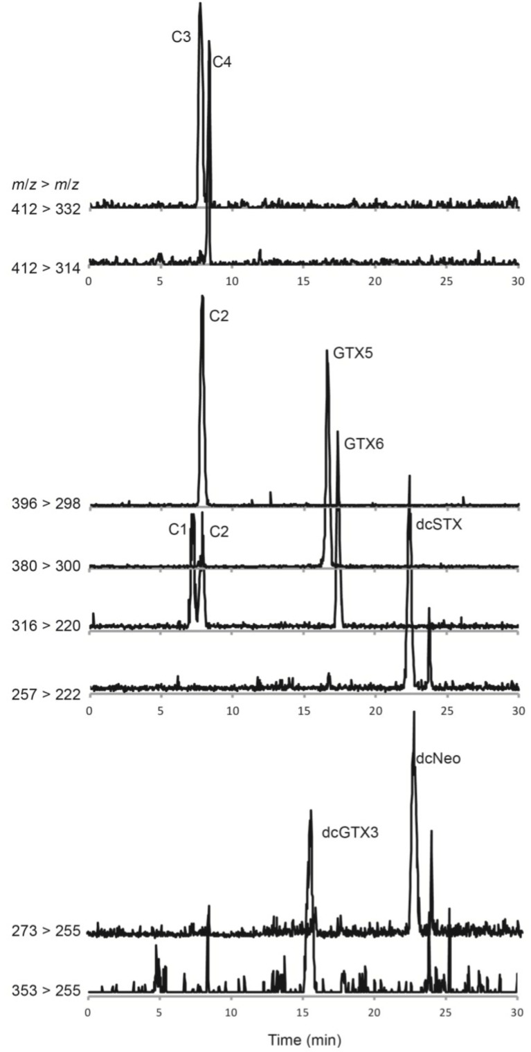 Hydrophilic interaction <t>liquid</t> ion <t>chromatography</t> <t>mass</t> <t>spectrometry</t> <t>analysis</t> of paralytic shellfish toxins in a Gymnodinium catenatum culture isolated from the Portuguese coast in 2007. Multiple reaction monitoring in positive polarity was used to identify <t>toxin</t> derivatives. At least two confirmatory ion transitions were monitored for each paralytic shellfish toxin (PST) derivative. The primary transition ions are shown for all confirmed toxins in the samples: m/z 257 > 222 for dcSTX, m/z 273 > 255 for dcNeo, m/z 316 > 220 for C1 and GTX6, m/z 353 > 255 for dcGTX3, m/z 380 > 300 for GTX5, m/z 396 > 298 for C2, m/z 412 > 314 for C4 and m/z 412 > 332 for C3 (see Table 2 for details on the MS/MS parameters).