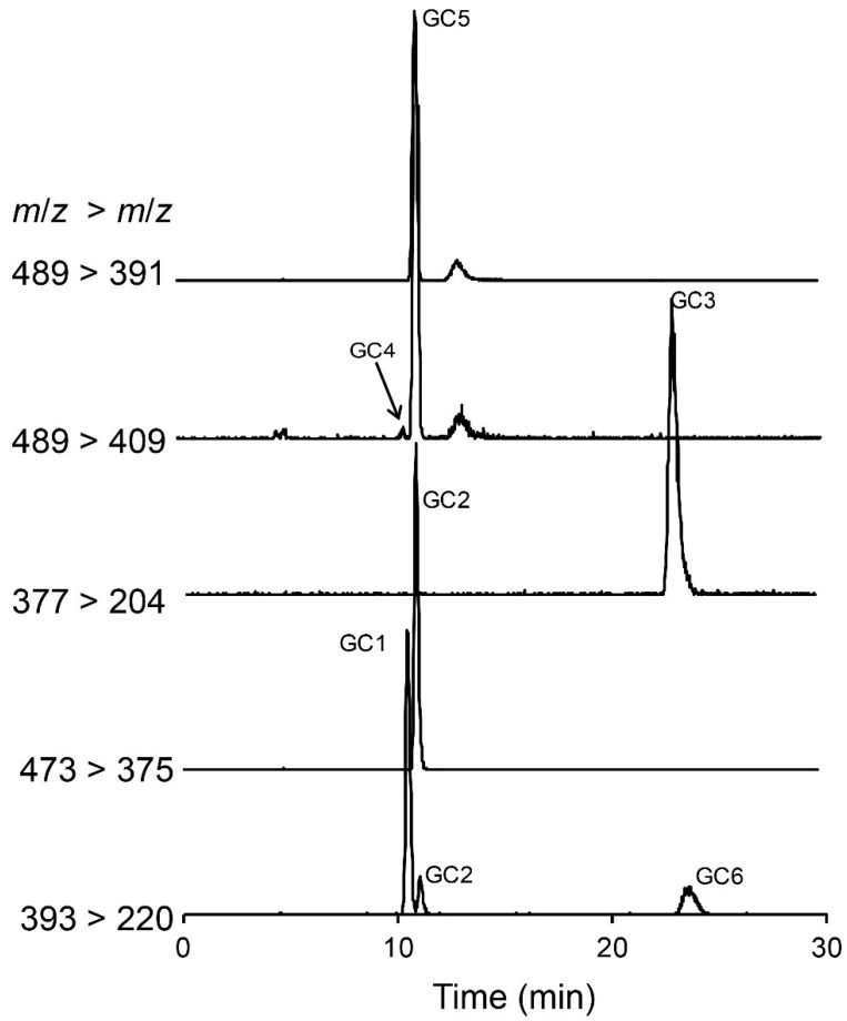 Hydrophilic interaction liquid ion chromatography-mass spectrometry analysis of paralytic shellfish toxins in a Gymnodinium catenatum culture isolated from the Portuguese coast in 2007. Multiple reaction monitoring in positive polarity was used to identify hydroxybenzoate PST analogues GC1–6 that were detected and confirmed in a Gymnodinium catenatum culture isolated from the Portuguese coast. Primary ion transitions are shown: m/z 377 > 204 for GC3; m/z 393 > 220 for GC1 and GC6; m/z 473 > 375 for GC2, m/z 489 > 409 for GC4 and 5, m/z 489 > 391 for GC5 (see Table 2 for details on the MS/MS parameters).