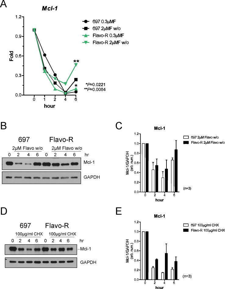 Mcl-1 protein levels are more stable to antagonize the flavopiridol-mediated depletion in Flavo-R (A) Cells were treated with continues exposure of 0.3μM flavopiridol or 2-hour exposure of 2μM flavopiridol with washout (w/o) and harvested for lysates and RNA preparation at pre (0 hr), 1, 2 and 4hr post treatment. Quantitative real-time PCR with TaqMan probes for Mcl-1 was used to measure its transcript abundance after treatment. Flavo-R showed significantly more Mcl-1 transcripts with both doses of flavopiridol at 6-hr time point. (B) Immunoblotting was applied to detect Mcl-1 protein levels in protein lysates collected from cells treated with 2μM flavopiridol for 4 hours and washout (w/o). (C) Densitometry is utilized to quantify the intensity of immunoreactive bands for Mcl-1 that is normalized to GAPDH and the bar graph shows the average of densitometry measurement of three independent experiments. Mcl-1 protein expression is more stable with the flavopiridol treatment in these resistant cells. (D) Cells were treated with 100μg/ml cycloheximide (CHX) to inhibit overall protein translation and compared with Mcl-1 protein stability between parental cells and Flavo-R. Treated cells were collected at pre (0h), 2, 4, and 6hr to assay short-life Mcl-1 protein levels by immunoblotting. (E) The bar graph shows the average of densitometry measurement of the intensity of immunoreactive bands for Mcl-1, which was normalized to GAPDH in three independent experiments. Levels of Mcl-1 protein expression are more stable in Flavo-R.