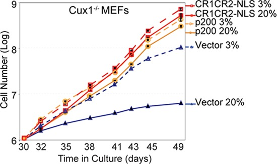 The proliferation block of Cux1−/− MEFs in 20% oxygen is rescued by CUX1 and by the Cut repeats 1 and 2 Cux1 −/− MEFs were stably infected in 3% oxygen with a retrovirus expressing p200 CUX1, CR1CR2-NLS or an empty vector. Following selection, cells were maintained in 3% or 20% oxygen and counted over a period of 19 days, from days 30 to 49.