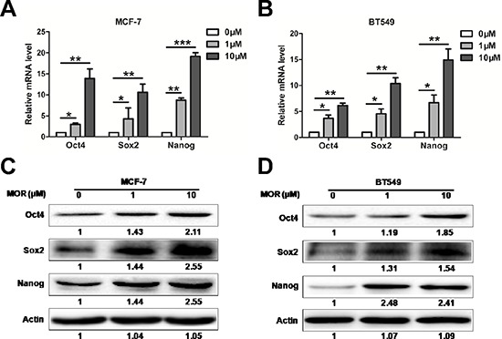 Morphine increases the expression of Sox2, Oct4 and Nanog (A–B) The mRNA levels of Sox2, Oct4 and Nanog in MCF-7 and BT549 cells were measured by Q-PCR after treating with morphine (0, 1, 10 μM) for 4 days. * P