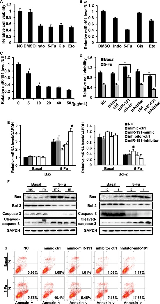 The involvement of miR-191 in the 5-Fu-induced cell apoptotic pathway in HCT116 cells HCT116 cells were treated with various commonly-used chemotherapeutic drugs, including <t>5-fluorouracil</t> (5-Fu, 10 μg/ml), indomethacin (Indo, 10 μg/ml), cisplatin (Cis, 10 μg/ml) and etoposide (Eto, 2 μM). (A) Cell viability was assessed by CCK8 assays. (B) RT-PCR analysis of the relative expression of miR-191. (C) 5-Fu down-regulated miR-191 in a dose-dependent manner. HCT116 cells were treated with the indicated concentration of 5-Fu for 48 hours, total mRNA was isolated, and the miR-191 level was analyzed by RT-PCR (* P