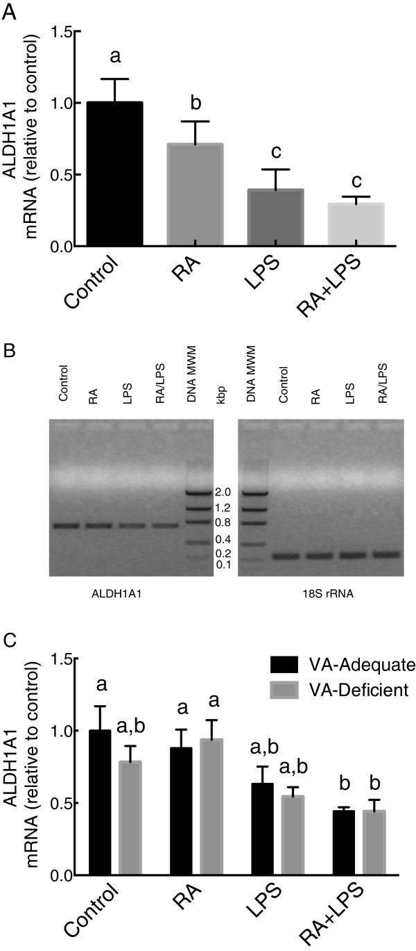 ALDH1A1 mRNA relative expression levels in 8-wk old rats fed chow diet (A and B) and in VAA and VAD rats (C). Total RNA was extracted from the liver samples of individual rats and quantified by real time PCR with SYBR Green for ALDH1A1 and 18S ribosomal RNA (rRNA) (A and C) . Upon completion, the PCR products from individual samples in Figure 1A were pooled in each group and subjected to ethidium bromide agarose gel electrophoresis, with DNA molecular weight markers (MWM) (B) . Values in A and C were individually normalized to 18S RNA and are expressed as the mean ± SEM of n = 4-6/group. Groups not sharing a common letter were significantly different, P