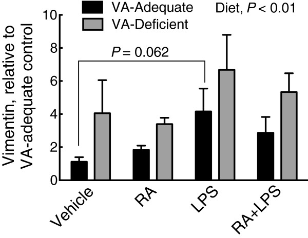 Relative mRNA expression of vimentin in VAA and VAD diet rat liver. Vimentin mRNA in VAA (black bars) or VAD (grey bars) rats, determined by qRT-PCR. Normalized values were expressed as the mean ± SEM of n = 5 ( n = 4 for VAD vehicle)/group, with the VAA control group set to 1.0. Diet was a significant main effect, P