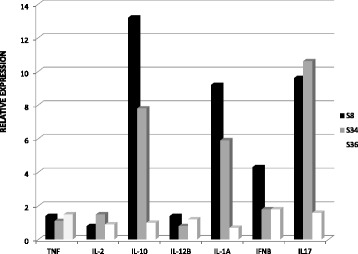 Relative expression of cytokines in PBMC from Saimiri sciureus using TaqMan® Gene Expression Array Plates. The gene expression analysis of IFN-γ, IL-10, IL-12B, IL-17A, IL-1A, IL-2 and TNF from three Saimiri sciureus (S8, S34 and S36) cultured in the presence of PMA/ionomycin for 12 hours. The relative expression was considered as the expression of the corresponding genes in PBMC obtained from the healthy human donor.