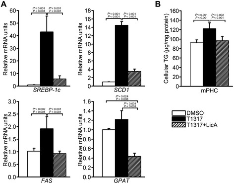 Effects of LicA on (A) the LXRα-stimulated expression of lipogenic genes and (B) TG accumulation in mouse primary hepatocytes. (A) T0901317-induced expression of SREBP-1c, SCD1, FAS, and GPAT was determined in the presence or absence of LicA by qRT-PCR. Data were presented as means (SD) from four independent experiments with triplicate determinations. (B) TG accumulation in response to cotreatment with T0901317 and LicA. Intracellular TG levels were measured enzymatically after treatment of primary hepatocytes with 1 μM T0901317 and 10 μg/mL LicA and normalized to total protein levels. Data were presented as means (SD) from four independent experiments with duplicate determinations. Statistical analysis was performed by one-way ANOVA. P * = P value for Bonferroni correction. DMSO, dimethyl sulfoxide; T1317, T0901317.