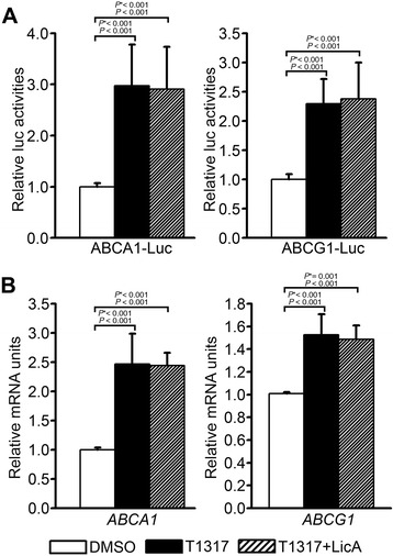 Effects of LicA on (A) the LXRE-containing promoter activity of ABCA1 and ABCG1 genes and (B) the T0901317-stimulated mRNA levels of ABCA1 and ABCG1. (A) The activity of ABCA1 LXRE-luciferase or ABCG1 LXRE-luciferase was determined, following treatment with 1 μM T0901317 and 10 μg/mL LicA, in HepG2 cells and normalized to cotransfected β-galactosidase activity. Data were presented as means (SD) from four independent experiments with duplicate determinations. (B) The mRNA levels of ABCA1 and ABCG1 were measured in primary hepatocytes treated with 1 μM T0901317 and 10 μg/mL LicA by qRT-PCR. Data were presented as means (SD) from 4 independent experiments with triplicate determinations. Statistical analysis was performed by one-way ANOVA. P * = P value for Bonferroni correction. DMSO, dimethyl sulfoxide; T1317, T0901317.
