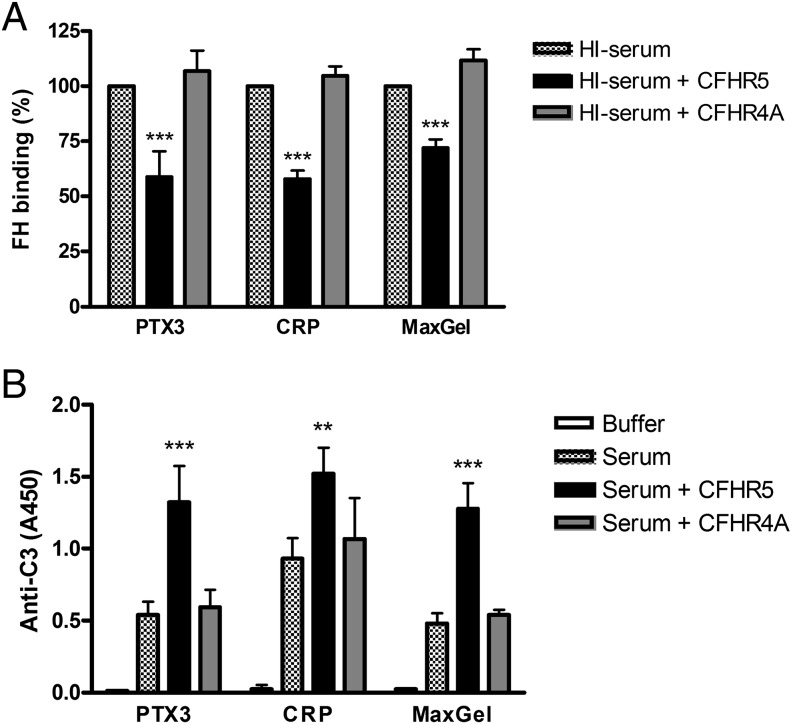 CFHR5 competes with FH in serum for binding to PTX3, <t>CRP,</t> and MaxGel and causes enhanced C3 fragment deposition. ( A ) Wells were coated with 10 μg/ml PTX3, 10 μg/ml CRP, and MaxGel diluted 1:30 in <t>DPBS.</t> After blocking, the wells were incubated for 30 min at 37°C with 25% heat-inactivated human serum with or without 0.5 μM CFHR5 and CFHR4A. FH binding was detected with mAb A254 and the corresponding secondary Ab. The normalized values are means ± SD derived from three independent experiments. *** p
