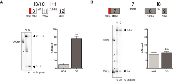 The MDM2 3-11-12 s minigene undergoes damage-induced exon 11 skipping in an in vitro splicing system while a control p53 7-8-9 minigene remains unresponsive. ( A ) A minimal MDM2 3-11-12 s minigene, constructed to assess the elements essential for the generation of MDM2-ALT1 alternative splicing, was derived from the previously described MDM2 3-11-12 minigene, which is responsive to stress-induced alternative splicing. The schematic represents the 3-11-12 s minigene and the sizes depicted reflect the length of the exonic and intronic regions of the minigene construct and are inclusive of the Flag-tag and the intervening region (cloning sites) of the <t>pCMV-tag2B</t> vector at the 5′ end of the minigene construct. In vitro -transcribed RNA obtained from the minigenes was subjected to a cell-free in vitro splicing assay using nuclear extracts from either normal (N, NOR) or cisplatinum-treated HeLa S3 cells (C, CIS). RNA was isolated, reversed transcribed and subjected to a 25-cycle PCR using γ- 32 P-radioactively-labeled Flag primer and gene-specific reverse primers. The MDM2 minigene predominantly skips internal exon 11 when spliced in nuclear extracts from cisplatinum-treated cells, but not in nuclear extract from normal cells. The bar graphs represent the percentage of 3.12 skipped product obtained from three independent in vitro splicing experiments under each condition and the error bars represent standard error mean (SEM). The difference in the percentage of 3.12 product between normal and damaged splicing conditions is statistically significant ( n = 3). *Indicates non-specific band also seen in –ATP controls (see Supplementary Figure S1). ∧ Indicates probable PCR degradation products. ( B ) Damage-responsive alternative splicing is transcript-specific. A p53 7-8-9 minigene shows no changes in splicing patterns between the normal and damaged nuclear extract ( n = 3). The sizes of the minigene depicted in the schematic are reflective of the Flag-tag and vector-