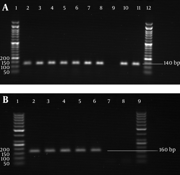 PCR Amplification A) glyRS gene of M. catarrhalis strains. Lanes 2-8, isolated strains; lane 9, negative control; lanes 10-11, standard strains; lanes 1 and 12; 50 bp DNA marker. B) pdhC gene of N. lactamica strains. Lane 2, standard strain; lanes 3-6, isolated strains; lanes 7-8, negative controls; lanes 1 and 9, 50 bp DNA marker