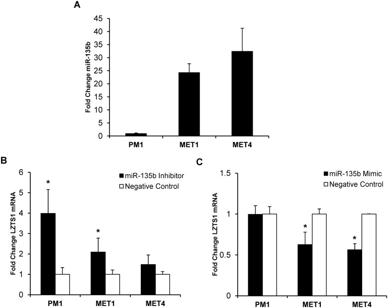 Functional assays of miR-135b inhibition and overexpression. A) Baseline mRNA miR-135b expression in 3 different OTR-derived cSCC cell lines was established by qRT-PCR. B) Effect of miR-135b inhibition on LZTS1 mRNA expression in cSCC lines by qRT-PCR within 48 hours post-transfection. C) Effect of miR-135b overexpression on LZTS1 mRNA expression in cSCC lines by qRT-PCR within 48 hours post-transfection. * indicate p values less than 0.005.