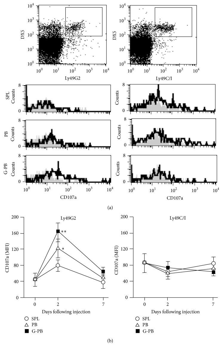 Neutrophils promote a licensing effect of NK cells: CD107a degranulation assay. Forty Gy-irradiated 2 × 10 6 mononuclear cells (splenocyte, SPL; peripheral blood, PB; and G-CSF-treated PB, G-PB) of B10.D2 mice were injected intraperitoneally into B10 mice. Two days after injection of cells, peripheral blood mononuclear cells of recipient B10 mice were analyzed by flow cytometry. Representative histograms show CD107a expressions gated on DX5 + CD3 − Ly49G2 + cells ((a), left) and DX5 + CD3 − Ly49C/I + cells ((a), right) in treated B10 mice (solid line) and untreated as controls (shadow area). Time course of mean fluorescence intensity (MFI) of CD107a expressions of DX5 + CD3 − Ly49G2 + cells ((b), left) and DX5 + CD3 − Ly49C/I + cells ((b), right) was analyzed before ( n = 11) and after injection of SPL (open circle, n = 18), PB (open triangle, n = 18), and G-PB (filled square, n = 8). Data are expressed as the means ± SD. ∗ P