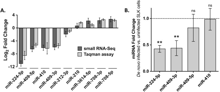 Analysis of miRNA expression in latent and de novo KSHV-infected cells. A. Data represent the average log 2 -transformed fold change of expression between latently infected SLKK cells and uninfected SLK cells, measured either by small RNA sequencing (black bars) or Taqman assay (grey bars). All the changes are significant ( P≤ 0.05) except that of miR-210 as detected by miRNA-Seq. B. Effects of de novo KSHV infection on miRNAs seen down-regulated in the SLK/SLKK model. SLK cells were exposed to KSHV and after 5 days, changes in specific miRNAs were assessed by Taqman assay. The dotted line indicates the normalized level of these miRNAs in uninfected SLK cells. P-values were calculated using Student t-test. ** indicates P